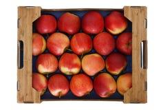Ask av äpplen från över Fotografering för Bildbyråer
