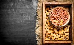 ask av jordnötter Fotografering för Bildbyråer