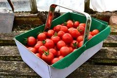 Ask av körsbärsröda tomater/träbakgrund Arkivfoto