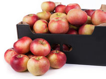 Ask av klart till Sale Lobo Apples Isolated On White bakgrund royaltyfria bilder
