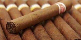 Ask av kubanska cigarrer Arkivbild
