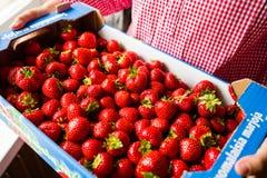 Ask av mogna jordgubbar Arkivbilder