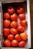 Ask av nya tomater från lokalt livsmedelsföretag Royaltyfria Foton