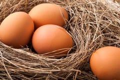 ask brutna fega äggägg inom yolk Royaltyfri Fotografi