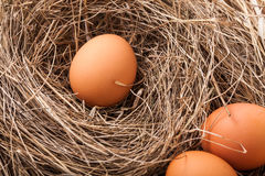 ask brutna fega äggägg inom yolk Arkivbilder