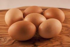 ask brutna fega äggägg inom yolk Royaltyfria Bilder