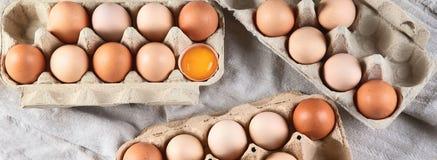 ask brutna fega äggägg inom yolk Top beskådar royaltyfri bild