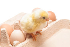 Ask med ägg och lite höna Fotografering för Bildbyråer