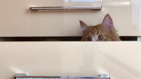 Ask med en katt lager videofilmer