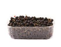Ask mycket av den isolerade svarta vinbäret Royaltyfri Fotografi
