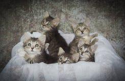 Ask mycket av kattungar arkivbilder