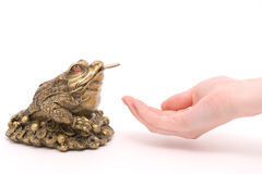 Ask to feng shui toad. Feng shui toad and stretched hand royalty free stock images