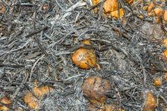 Aska av växttextur Royaltyfri Foto