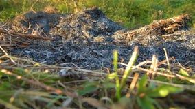 Aska efter brand på fält stock video