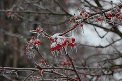 Aska i isen av Royaltyfri Fotografi