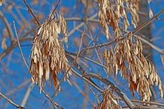 Aska i vintertiden Royaltyfria Bilder