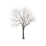 Aska-träd utan sidor Royaltyfri Bild