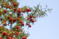 askaen branches berg Royaltyfria Bilder