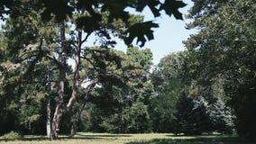 Askania Nova. Trees in the meadow. Landscape. stock video footage