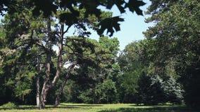 Askania Nova. Trees in the meadow. Landscape. stock video