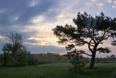Askania novo, Ucrânia 04 05 2016 Paisagem da mola da natureza da floresta, rio no nascer do sol - opinião nevoenta da natureza da Foto de Stock Royalty Free