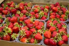 Askar av jordgubbar i bondemarknad Spjällådor mycket av fragaria Arkivfoto