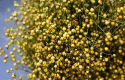 Askar av torrt moget lin Royaltyfria Bilder