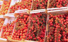 Askar med till salu röda mogna tomater Arkivbild