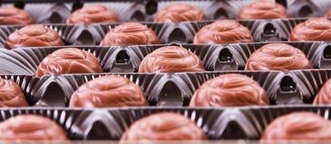 askchoklader Fotografering för Bildbyråer