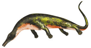 Askeptosaurus aquatic dinosaur Stock Image