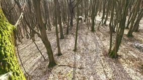Askjaktställning i skogen arkivfilmer