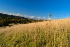 Askkulle, Surrey Arkivfoto