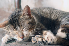 Asleep cat Stock Photography