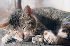 Asleep cat. Cat having a nap on the street Stock Photography