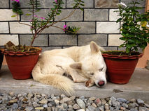 Asleep between the flowerpots Royalty Free Stock Photos