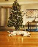 Asleep guarding the tree stock image