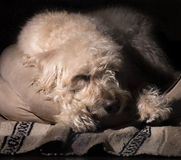 Asleep in His Bed Royalty Free Stock Photography