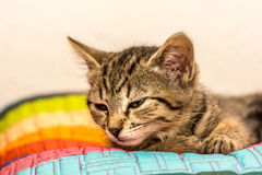 Asleep kitten Stock Images