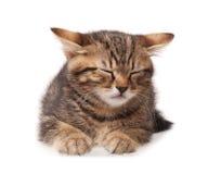 Asleep kitten Royalty Free Stock Photography