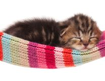 Asleep kitten stock image