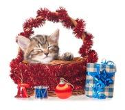 Asleep kitten Royalty Free Stock Image