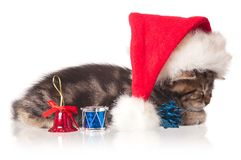 Asleep kitten Stock Photos