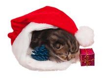 Asleep kitten Royalty Free Stock Images