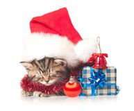 Asleep kitten Royalty Free Stock Images