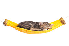 Asleep little kitten Royalty Free Stock Photography