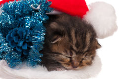 Asleep little kitten Stock Photo