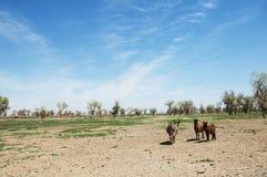 asno, burro, jackass, cabra, moke, neddy, burro, neddy imagens de stock royalty free