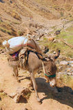 Asno com um saco nas montanhas de Usbequistão imagens de stock
