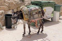 Asno do bloco em Palestina Imagem de Stock