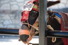 Asno em Mijas A Andaluzia, Espanha Imagens de Stock